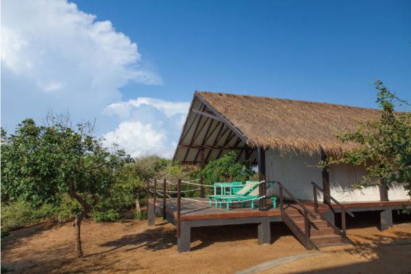 safaricamp